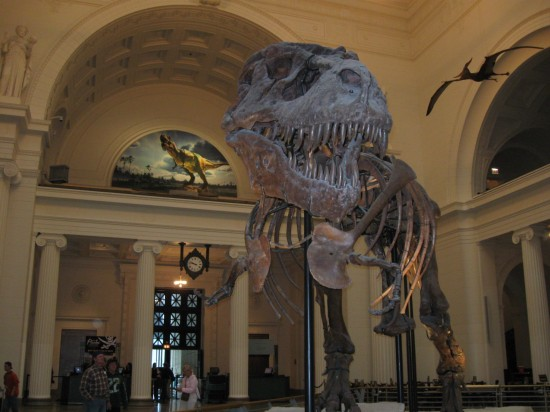 Sue the T-rex!