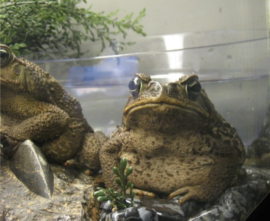 angry toad!