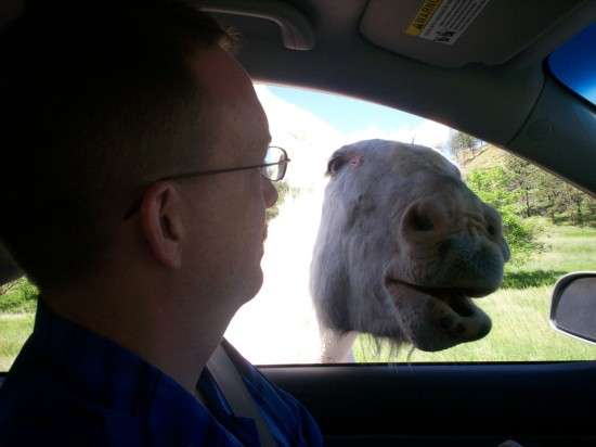 burro!