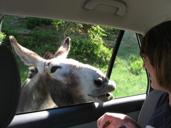 burro v boy!