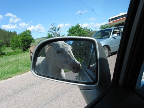 burros in mirror!