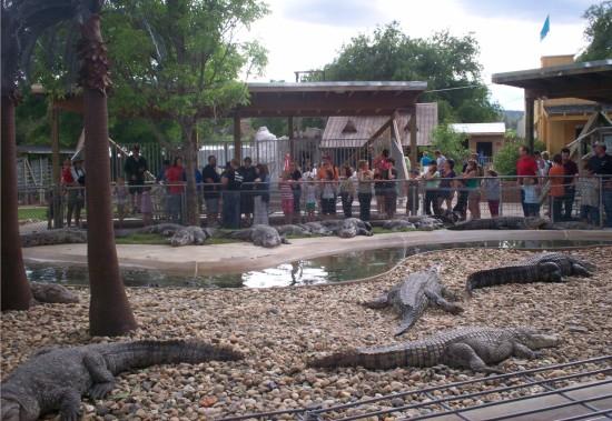 gators and crocs!