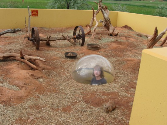 prairie dog dome!