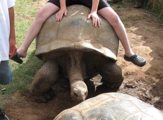 tortoise ride!