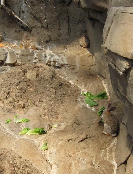 bunnies in mud!