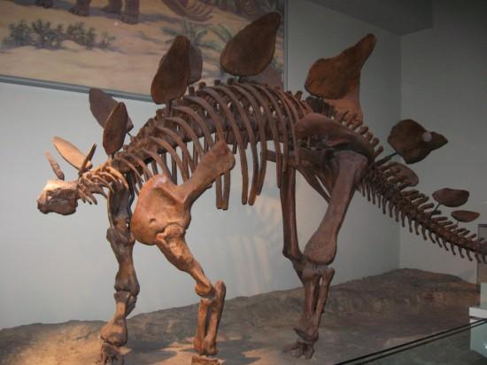 stegosaurus!