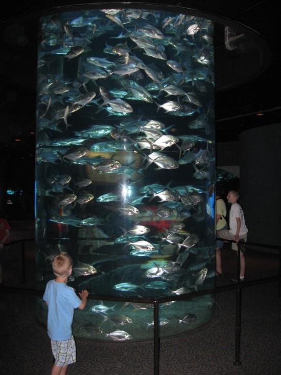 fish cylinder!