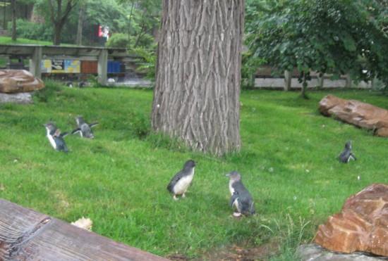 flightless birds!