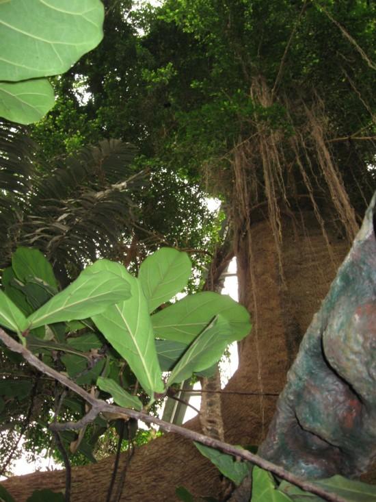 rain forest!