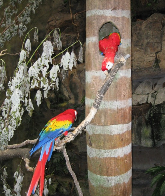 scarlet macaws!
