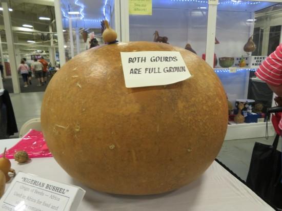 giant gourd!