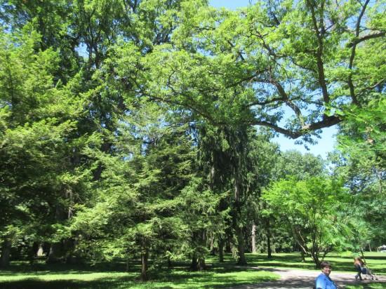 Hayes trees!
