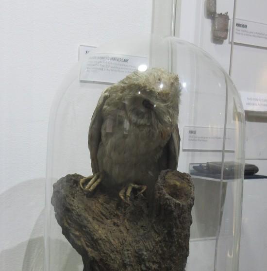 Stuffed Owl!