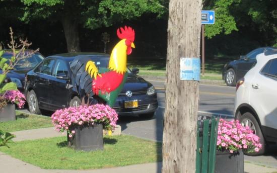 Kinderhook rooster!