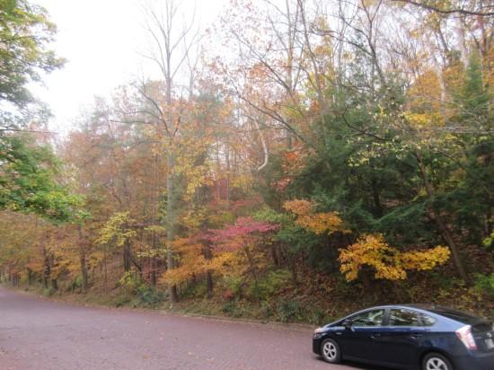 Autumn trees 2!