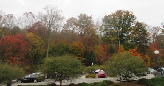 Autumn trees!