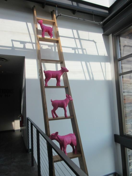 Baby Goat Ladder!