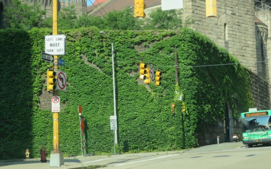 Pittsburgh overgrowth!