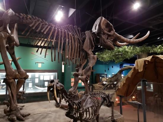 McKinley fossils!