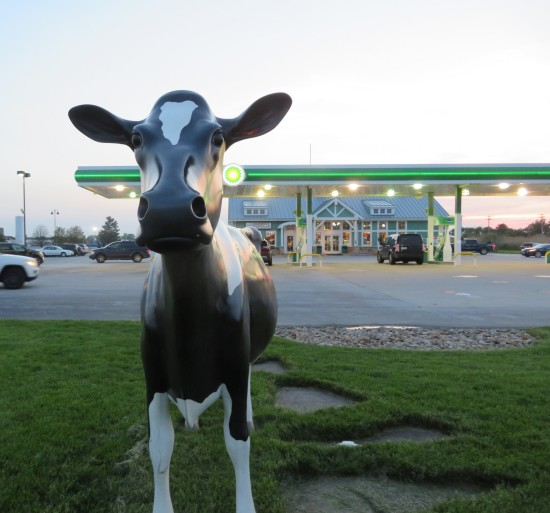 gas station cow!