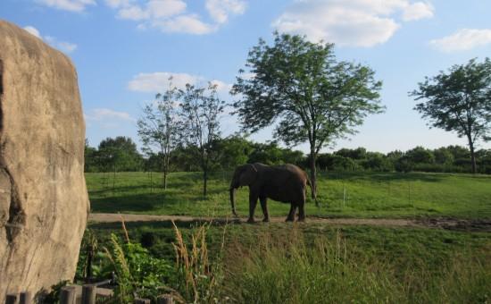 elephant faraway!