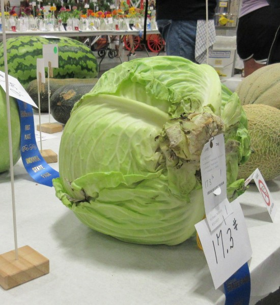 17-pound cabbage!