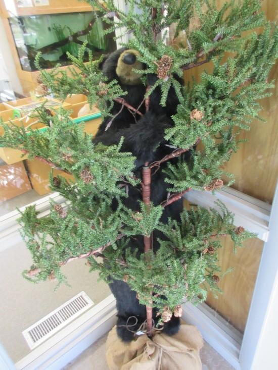 bear behind plant!