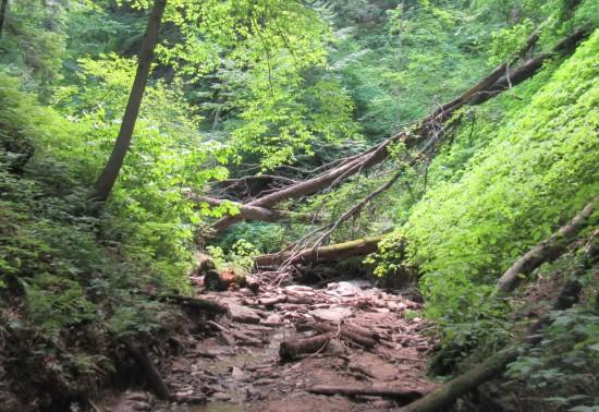 creek uphill!
