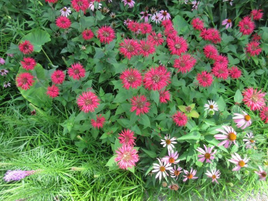 Red Flowers 2!
