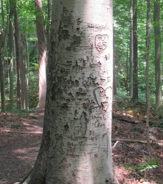 tree carvings!