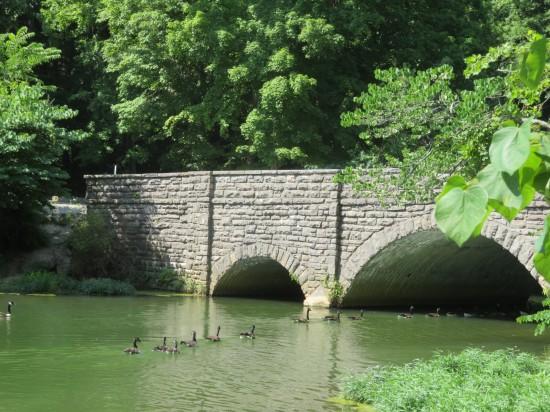 geese to bridge!