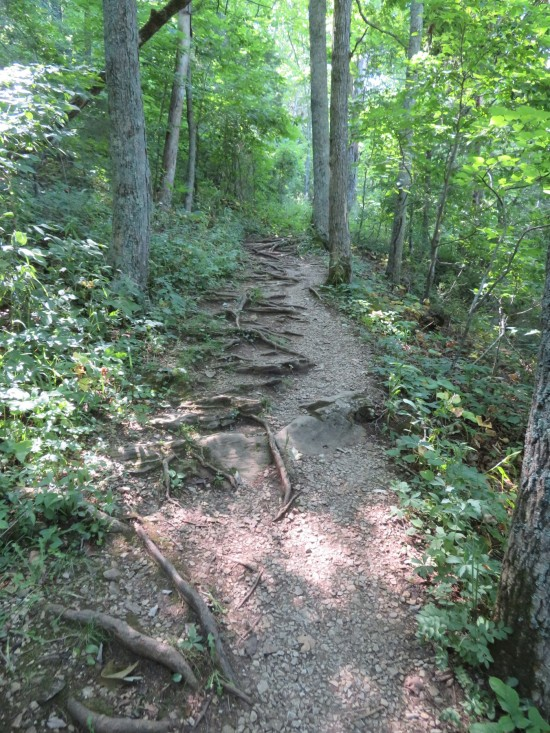 trail steps upward.