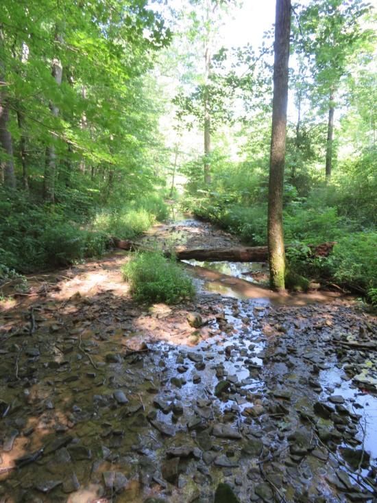 wetter trail.