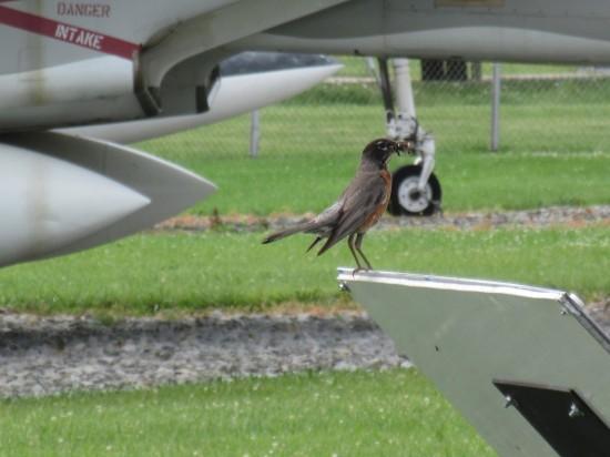 Grissom bird!