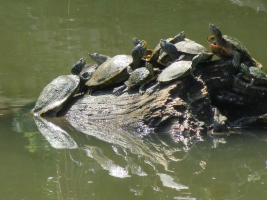 turtle party!