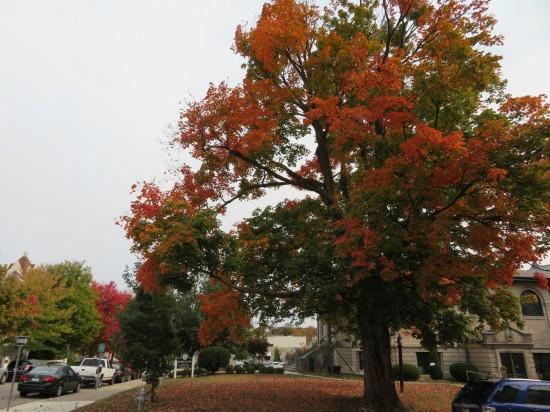 autumn tree!