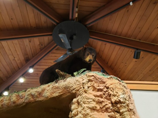 bear up high!