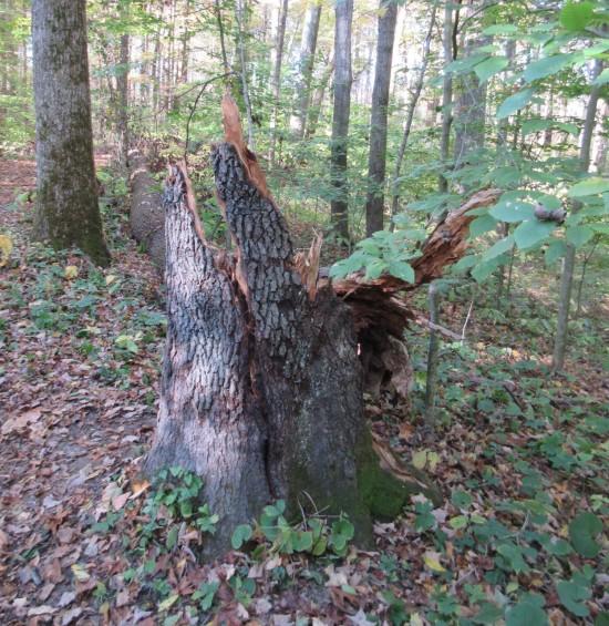 broken tree!