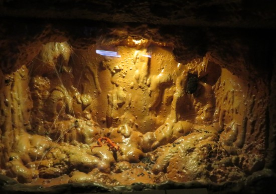cave salamander!