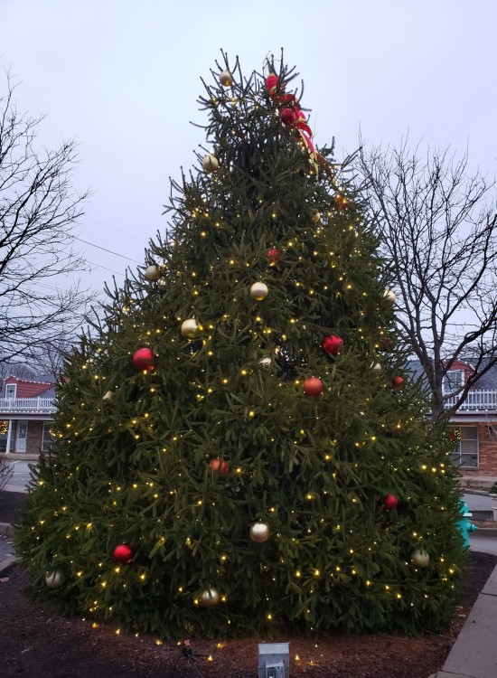 Zionsville giant outdoor Christmas Tree