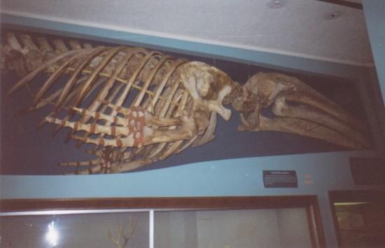large underwater dinosaur fossil.