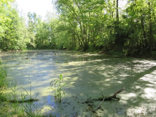Muscatatuck pond.