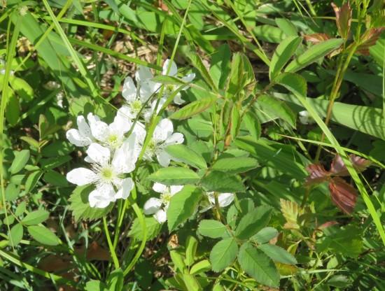 Muscatatuck weeds.
