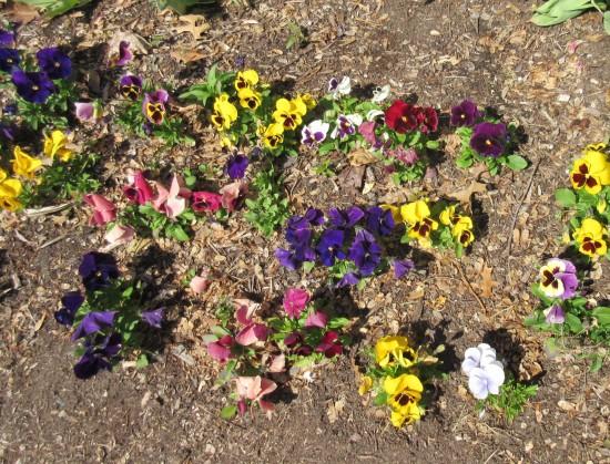 Indiana flower garden.