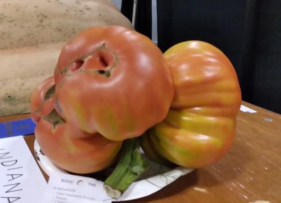 8-pound tomato!