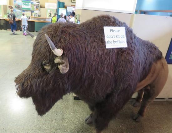 Buffalo Taxidermy!