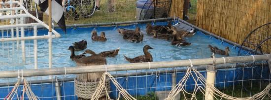 duck racing pool!