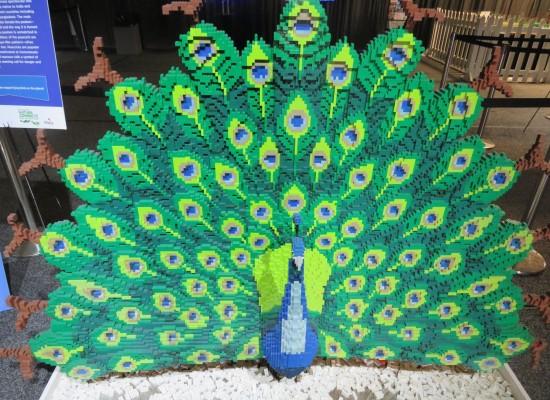 Lego peacock!