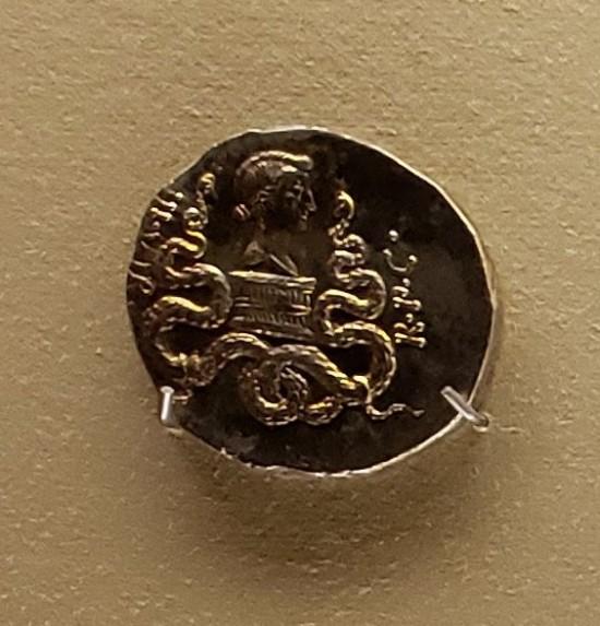 Octavia cistophorus!
