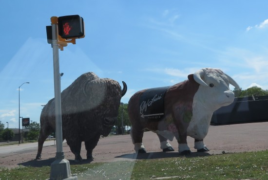 Buffalo and cow statues!